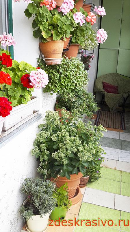 Ochitok_na_balkone
