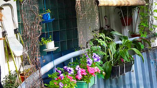 Tsvety_na_balkone
