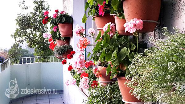 tsvety_na_moem_balkone