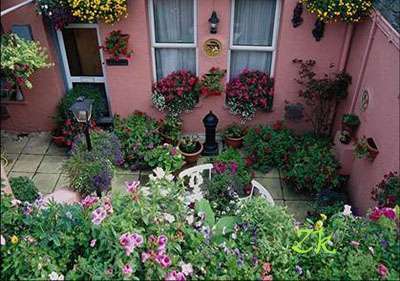 какие цветы посадить на северном_ балконе