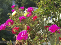 Цветы для  балкона солнечная сторона
