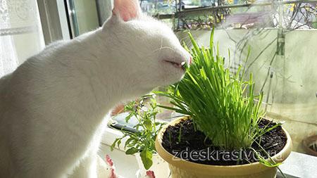 Растения и кошки на балконе