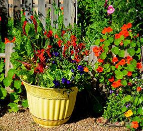 как посадить огород на балконе--