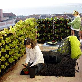 как посадить огород на балконе1