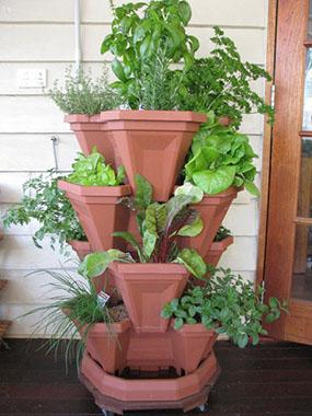 как посадить огород- на балконе