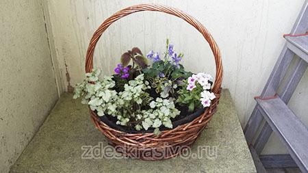 Растения для тени на балконе