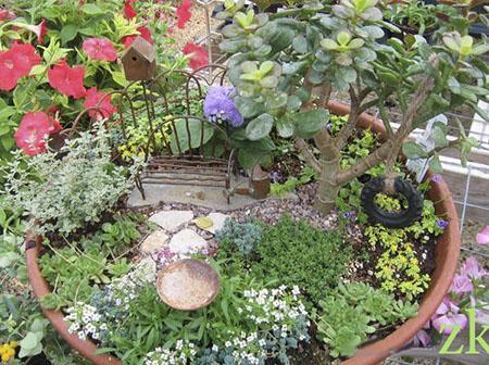 Толстолист выполняет роль дерева в мини  саду, установленном на балконе