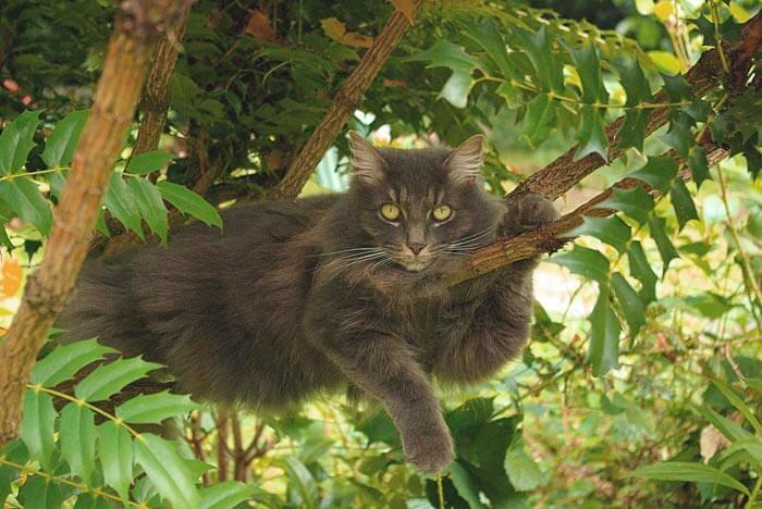 Кошка на дереве как у себя дома