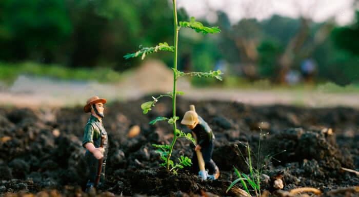 Как сделать мини сад