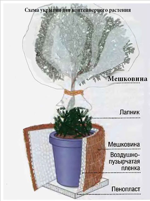 Chema-kak-pravilno-ukryt-rasteniya-zimoy