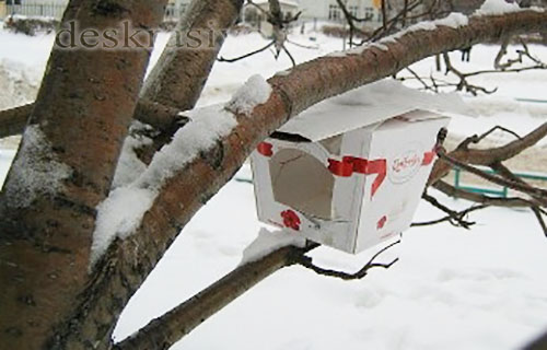 Kormushki-iz-korobok
