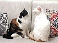 Кошачий язык или как сказать о любви
