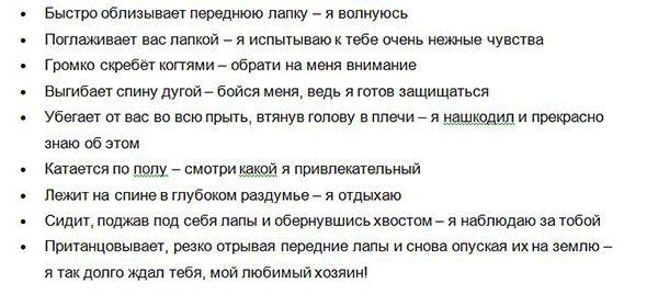 Perevodchik_s_koshachego_na_russkiy-chast2