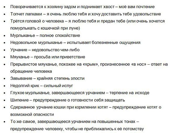 Perevodchik_s_koshachego_na_russkiy-chast3