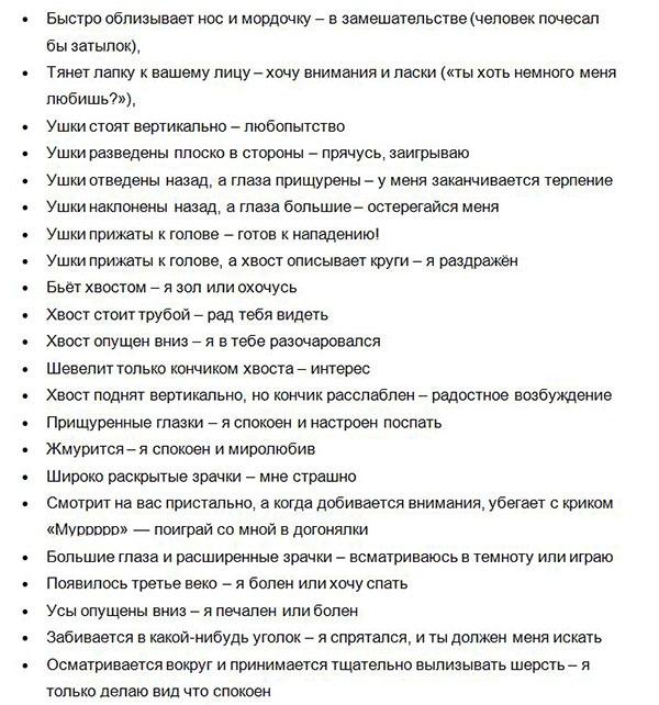Perevodchik_s_koshachego_na_russkiy
