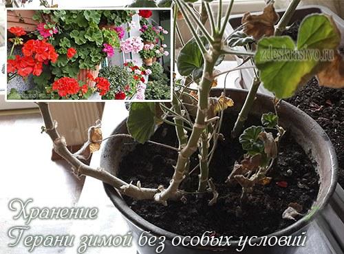 Geran_dlya_vesenney_obrezki