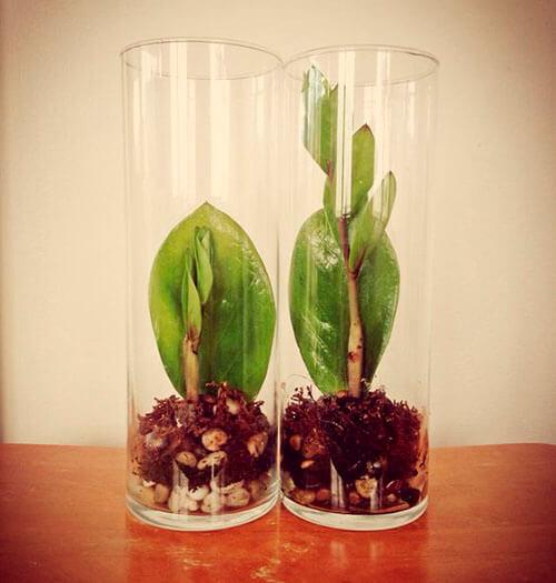 Замиокулькас размножение листом_