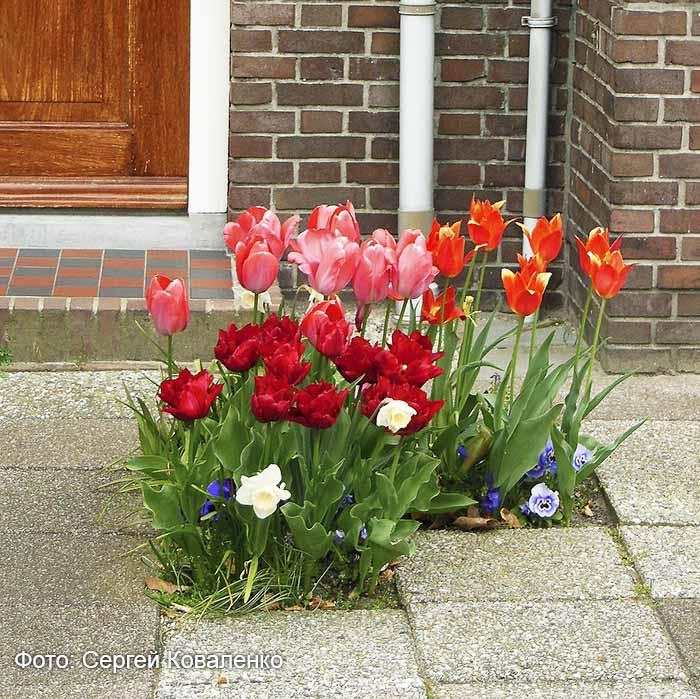 Голландские дворики садики и цветники1