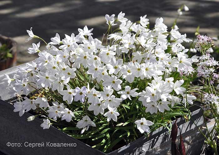 Голландские дворики садики и цветники  10