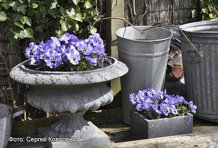 Голландские дворики садики и цветники 13