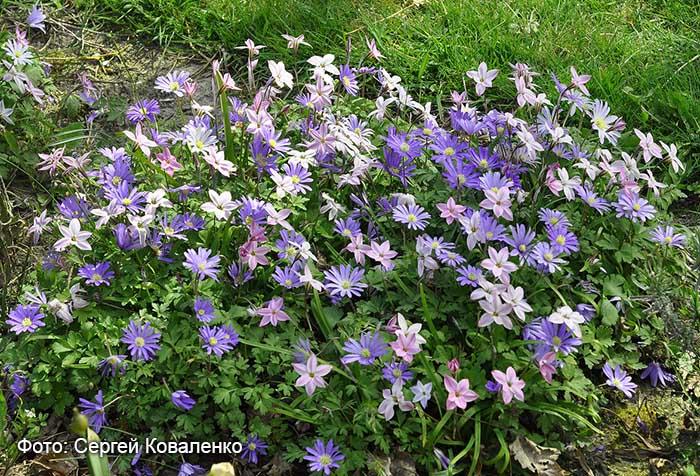 Голландские дворики садики и цветники 14