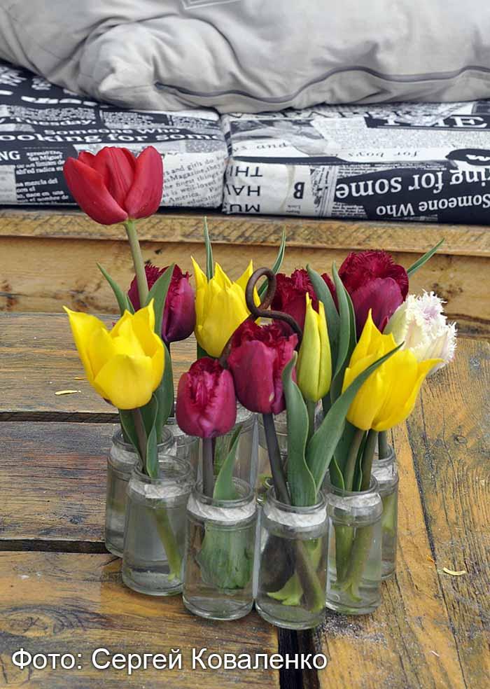 Голландские дворики садики и цветники7