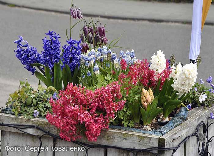 Голландские дворики садики и цветники 8
