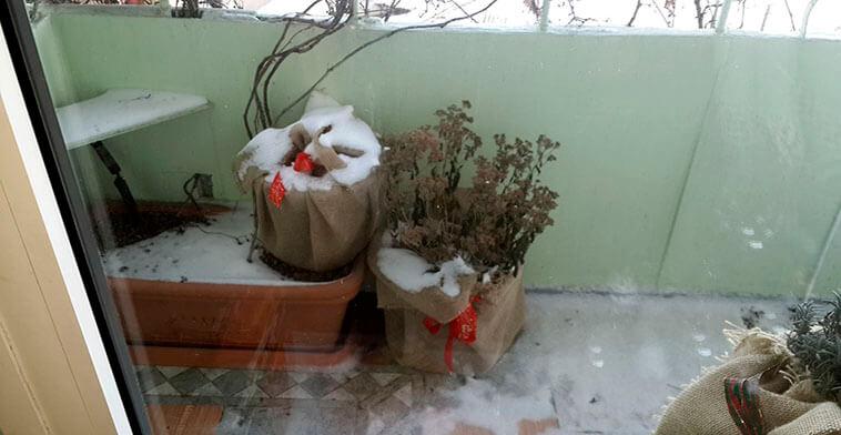 И в тепле и в красоте. Как красиво укрыть растения зимой на балконе