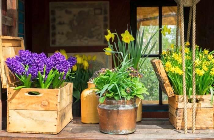 Какие цветы подходят для украшения дома на Пасху